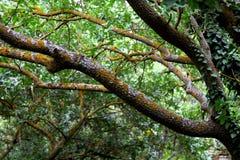 植物群种类 库存照片