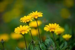 植物群花有迷离背景 免版税库存图片