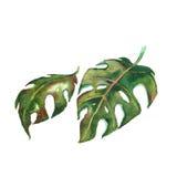 植物群 水彩花 库存例证