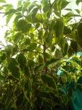 植物群 库存照片