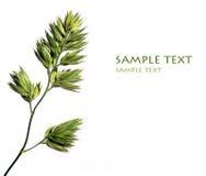 植物群 免版税图库摄影