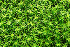 植物背景离开样式 免版税库存图片