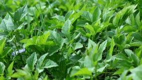 植物背景 免版税图库摄影