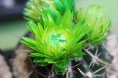 植物花 免版税库存照片
