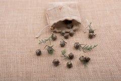 植物荚,在大袋外面的胶囊 库存照片
