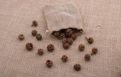 植物荚,在大袋外面的胶囊 免版税图库摄影