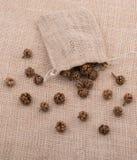 植物荚,在大袋外面的胶囊 免版税库存图片