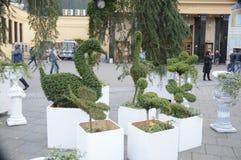 从植物莫斯科的图 免版税库存图片