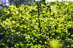 植物获取叶子 免版税库存图片