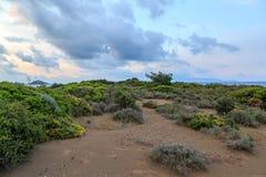 植物被保存的沙子栖所在Datca临近地中海 库存图片