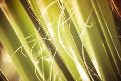 植物词根细节 库存照片