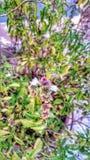 植物辉煌  免版税库存图片