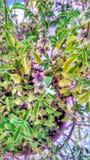 植物辉煌  免版税图库摄影