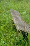 植物长满的老长凳 免版税库存照片