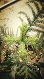 植物顶视图 图库摄影