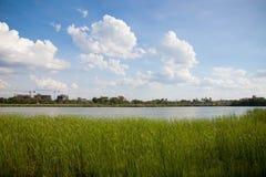植物风景和江边 库存照片