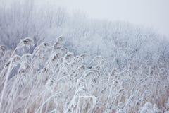 冻植物,冬天背景 免版税库存照片