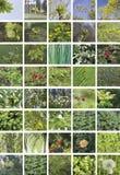 植物,四十个元素自然绿色拼贴画,垂直 免版税库存图片