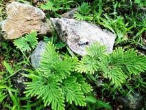 植物,山,森林, 库存照片