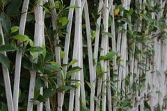 植物,篱芭的年轻绿色植物 库存图片