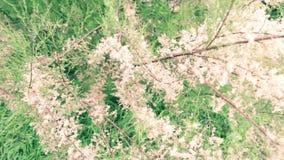 植物,花,树-细节 股票录像