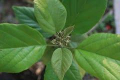 植物,年轻绿色植物 库存照片