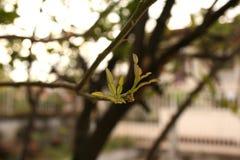 植物,年轻绿色植物 免版税库存照片