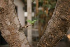 植物,绿色年幼植物 图库摄影