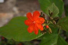 植物,年轻花 库存照片