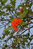 植物,年轻花 库存图片