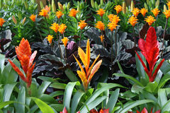 植物从一个卖花人的待售在花托儿所  免版税库存照片