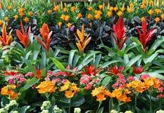 植物从一个卖花人的待售在花托儿所  图库摄影