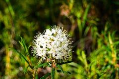 植物贝加尔湖taiga 免版税库存照片