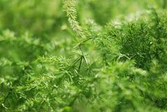 植物/叶子的宏观图象 库存照片