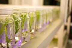 植物组织培养 库存图片