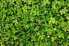 植物离开背景 免版税库存图片