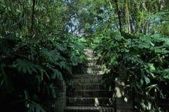 植物围拢的楼梯 免版税图库摄影