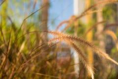 植物&花 免版税库存图片