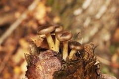 植物 蘑菇在下落的树增长 免版税图库摄影