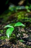 植物 免版税库存照片