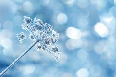 冻植物 库存照片