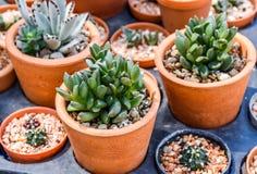 植物 免版税库存图片