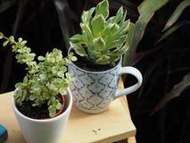植物 免版税图库摄影