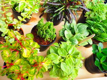 植物 图库摄影