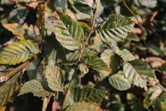 植物leefs的布什在公园好的背景树木头结构的 库存图片