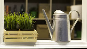 植物waterer 库存图片