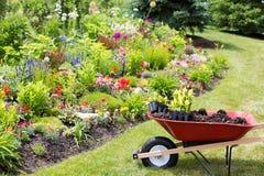 移植的新的春天植物到庭院里 免版税库存图片