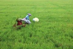 移植米幼木的女工 免版税库存图片