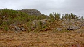 植被和岩石在挪威山高原 免版税库存照片