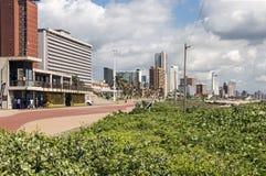 植被和散步反对金黄英里海滩前面Skylin 免版税库存图片